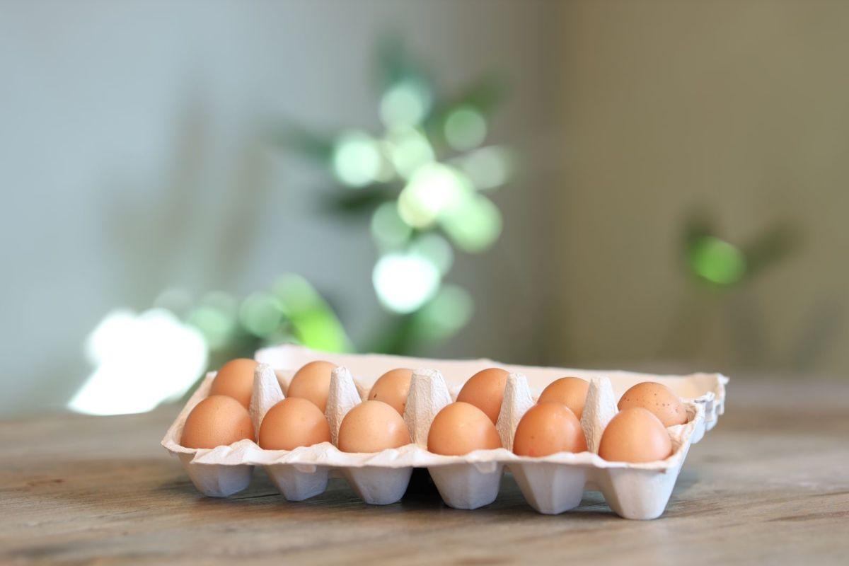 Highland Fresh - Free Range Eggs