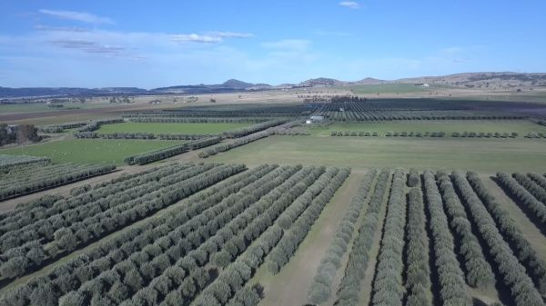 Pukura Estate, Upper Hunter Valley, New South Wales