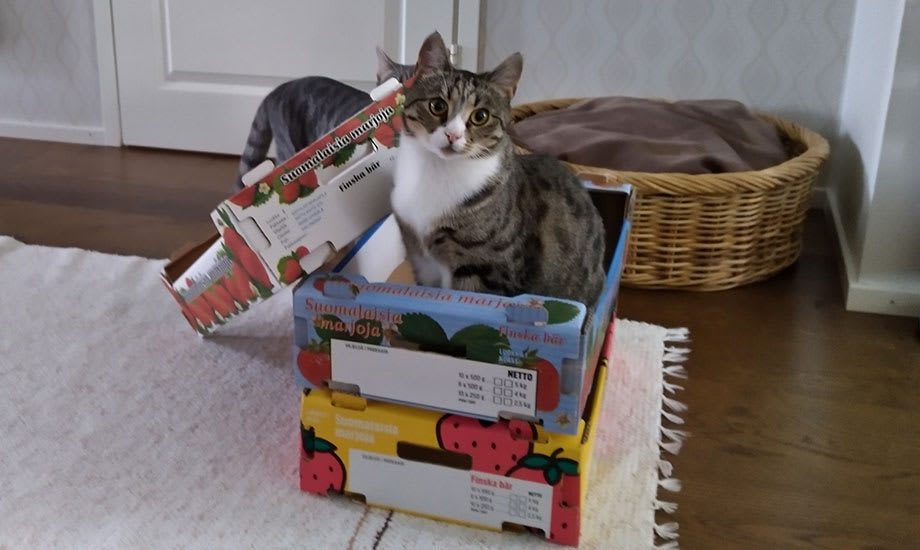 Mihin muuhun mansikkalaatikkoa voi käyttää?