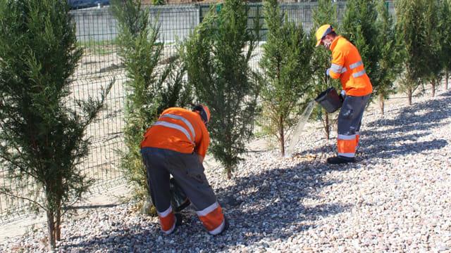 A tree planting biodiversity project in Porto, Portugal