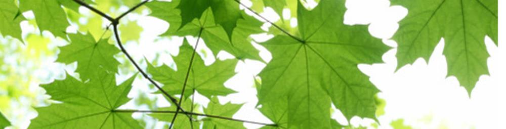 sustainability-280-1100.jpg