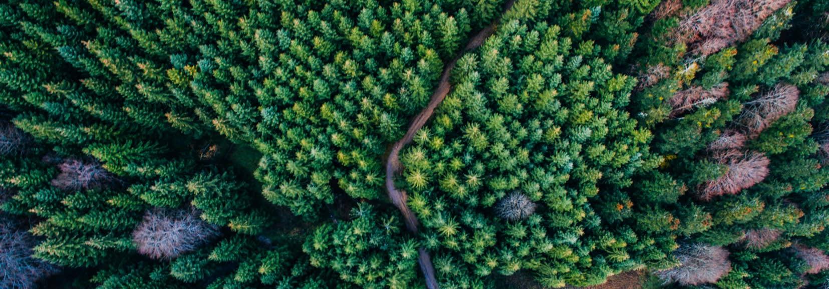 Nous protégeons la forêt au niveau mondial