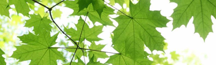sustainability-corporate.jpg