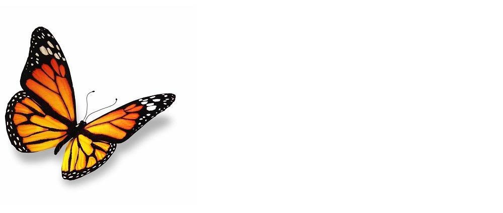 butterfly-1000n.jpg