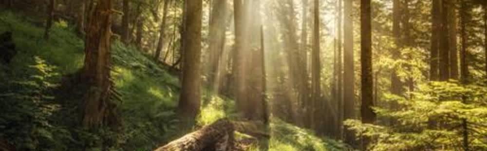 milestones_forests_.jpg