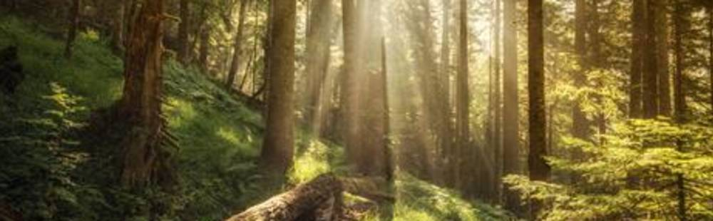 Milestones - forests.jpg