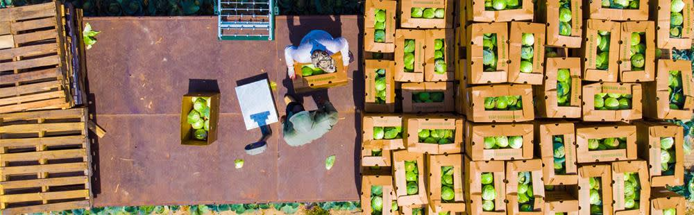 Cabbage-boxes-aerial.jpg