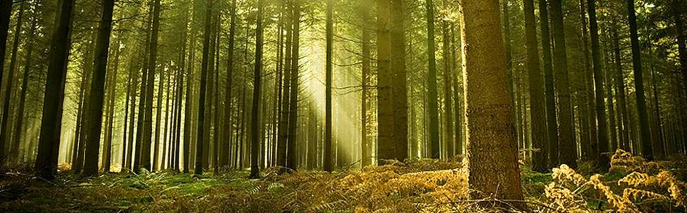 AdobeStock_10017097_top image.jpg