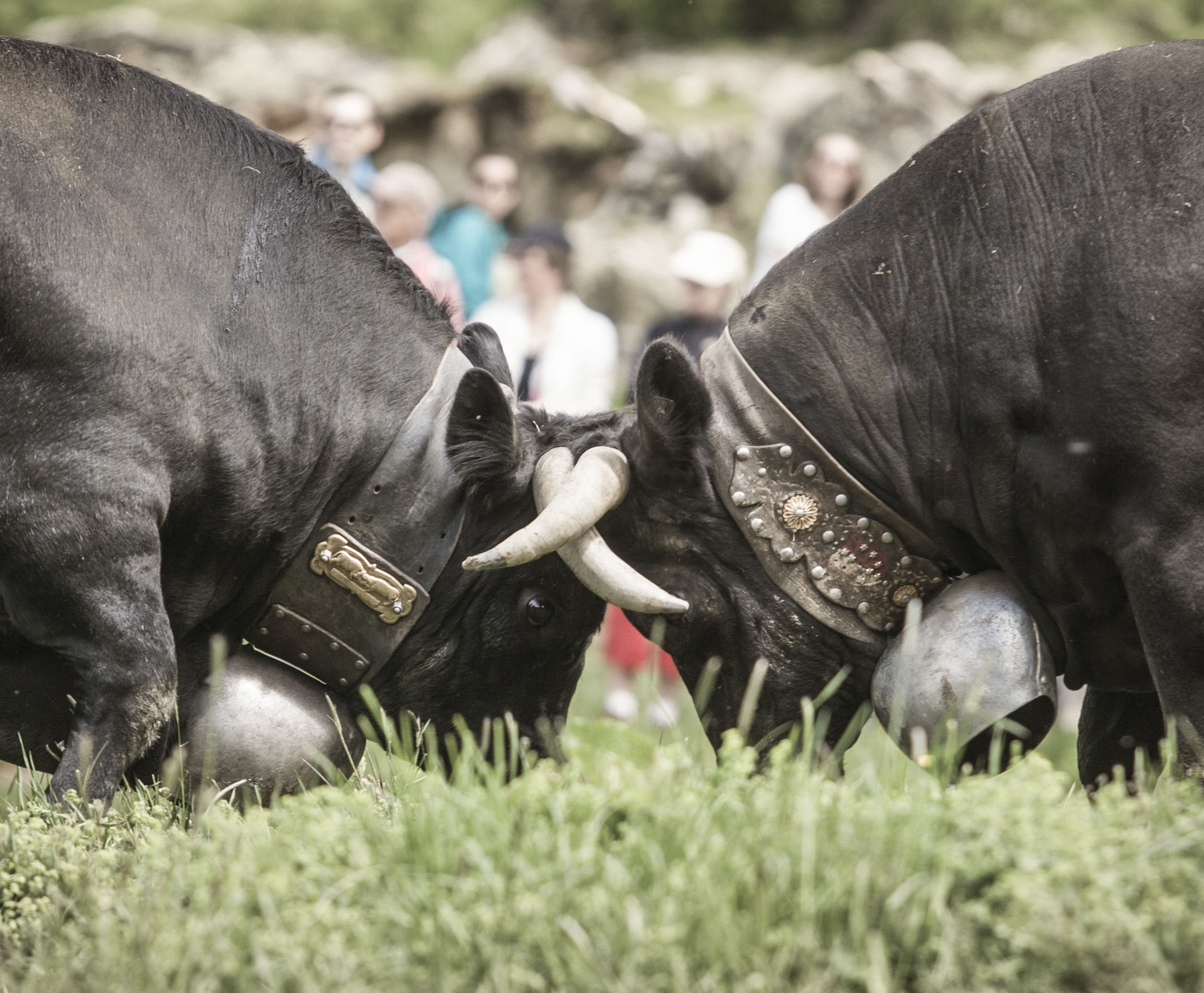 Top Events im Sommer