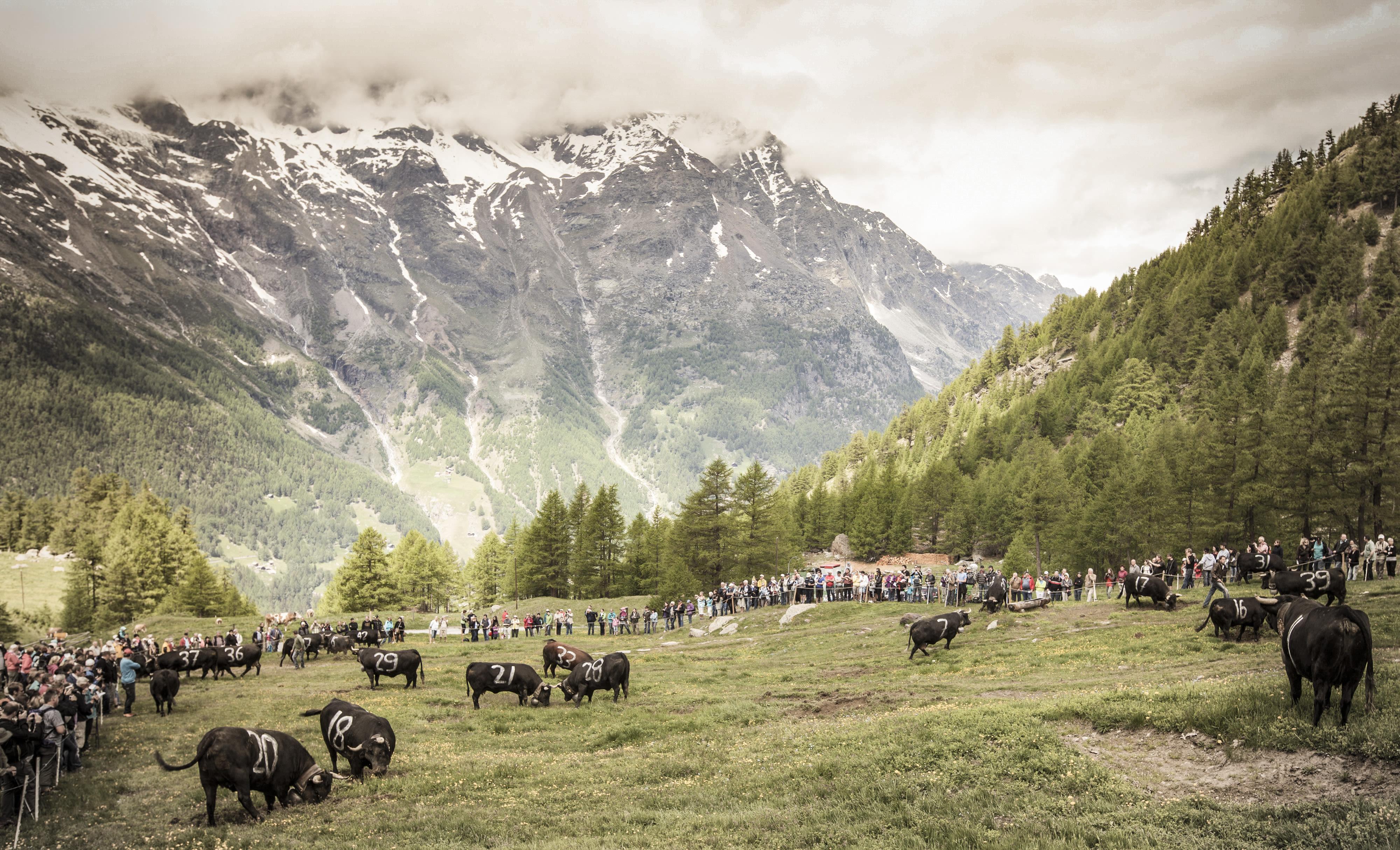 Farmers festivals