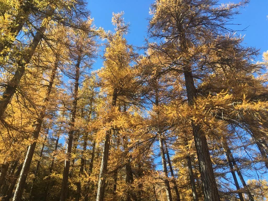 Schöner Herbstwald neben dem Haus