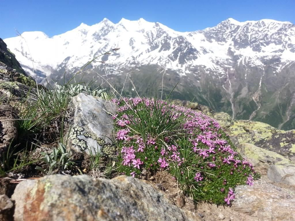 Fauna & Gletscher Saastal