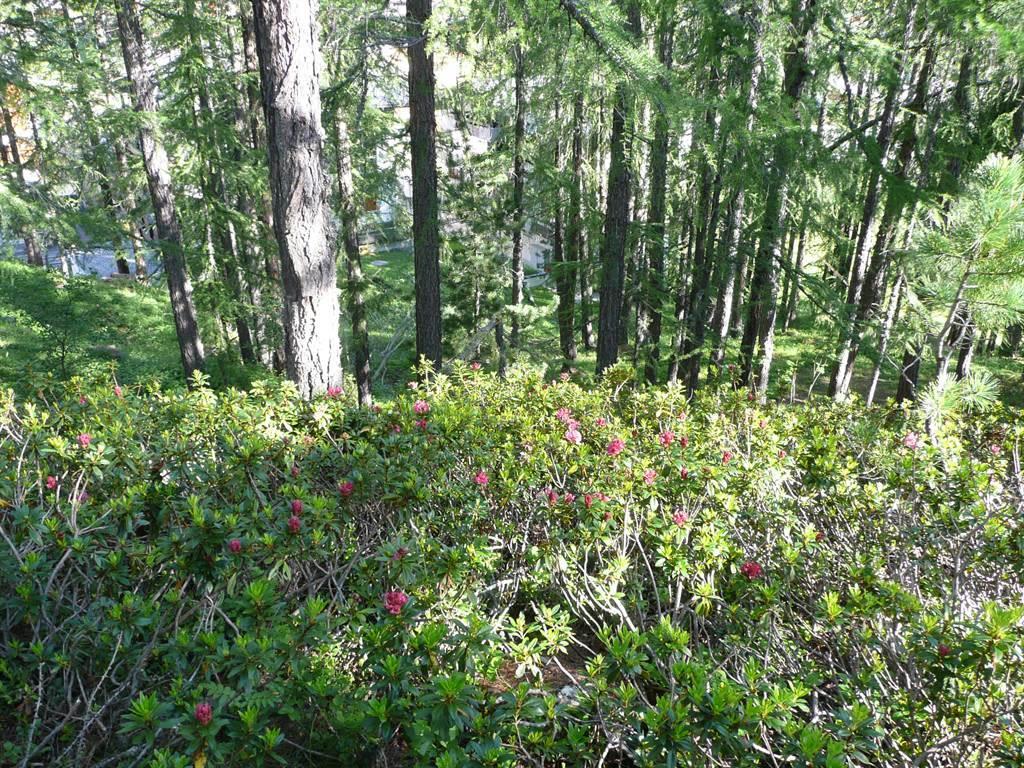 Sommer Am Vogelwald