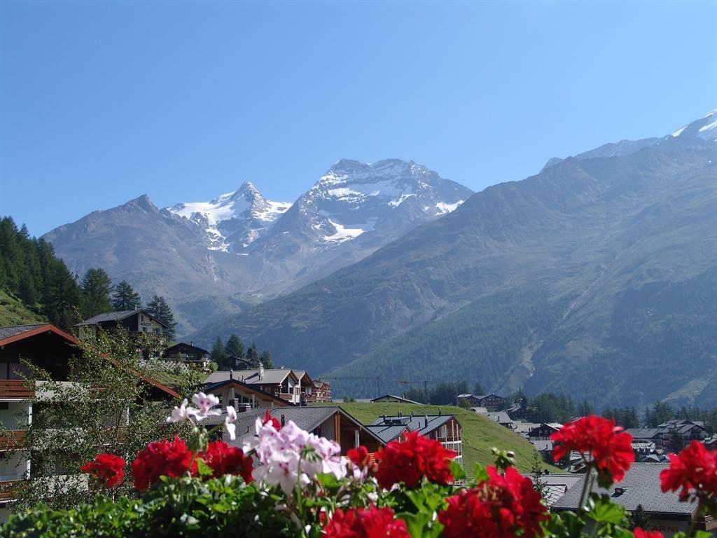 Sommerflor mit Bergpanorama vom Alpenfirn