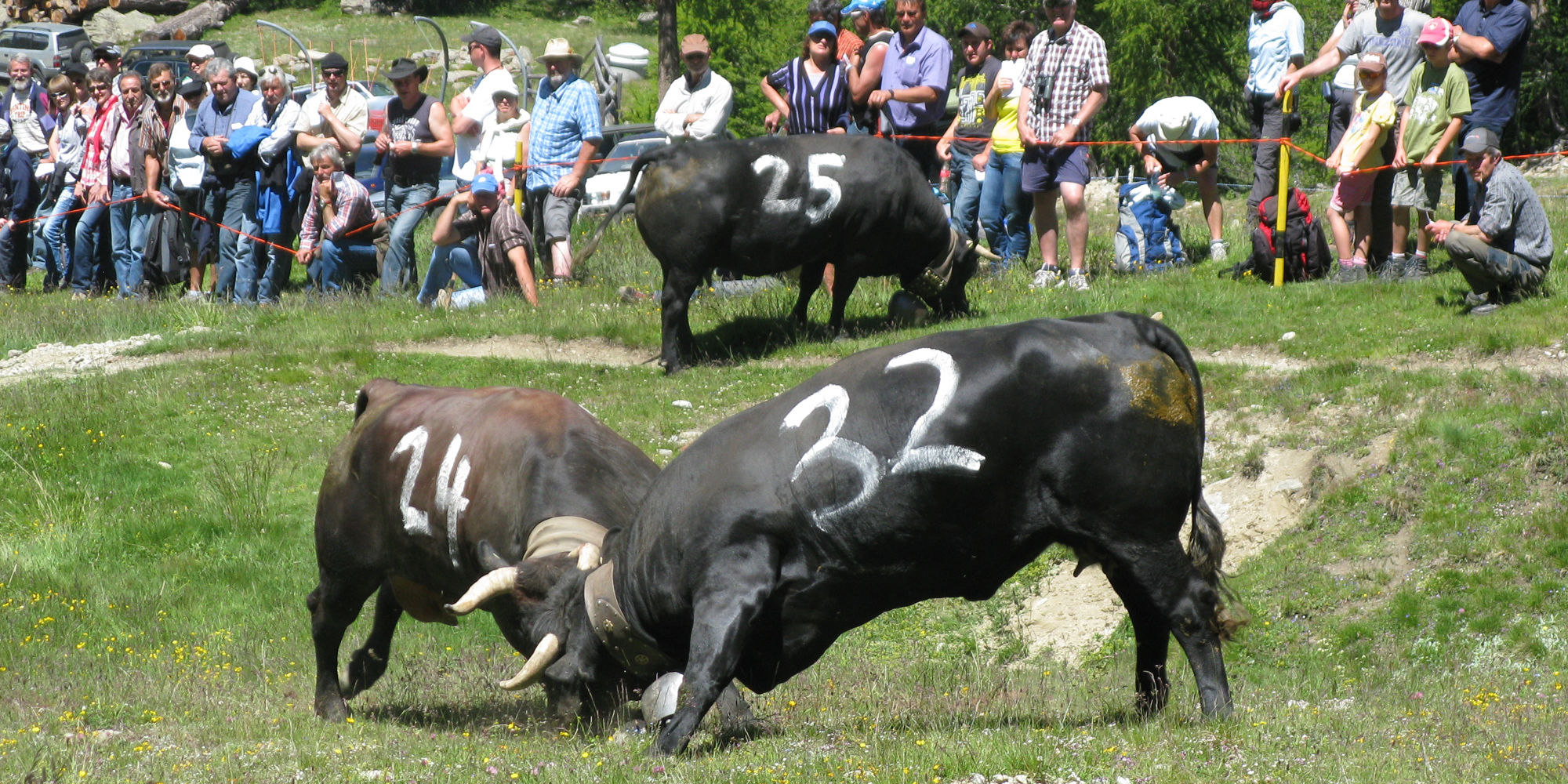 """Cow fights and alpine processions in the Free Republic of Holidays Saas-Fee"""