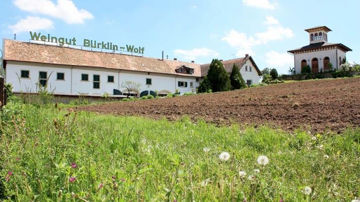 Hofgut Ruppertsberg / Weingut Bürklin-Wolf