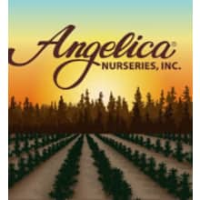 Angelica Nurseries, Inc. Logo