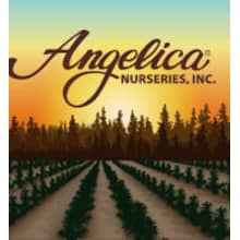 Angelica Nurseries, Inc. Logo