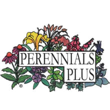 Perennials Plus Logo