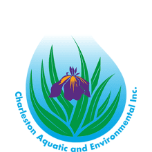 Charleston Aquatic & Environmental Logo