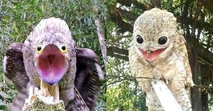 '충격적인 비주얼'로 사람들 놀라게 한 '희귀 새'의 정체는