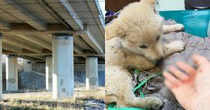 70대 노인이 '4M 높이'의 다리 위에서 '강아지' 하천에 던진 이유는