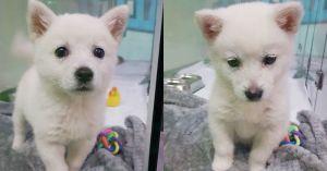 """""""모란역 '동물병원'에 버려진 생후 2개월 '강아지' 주인이 되어주세요"""""""