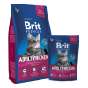 hrana pentru pisici adulte pisici cu pui