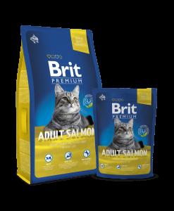 hrana pentru pisici adulte pisici cu somon