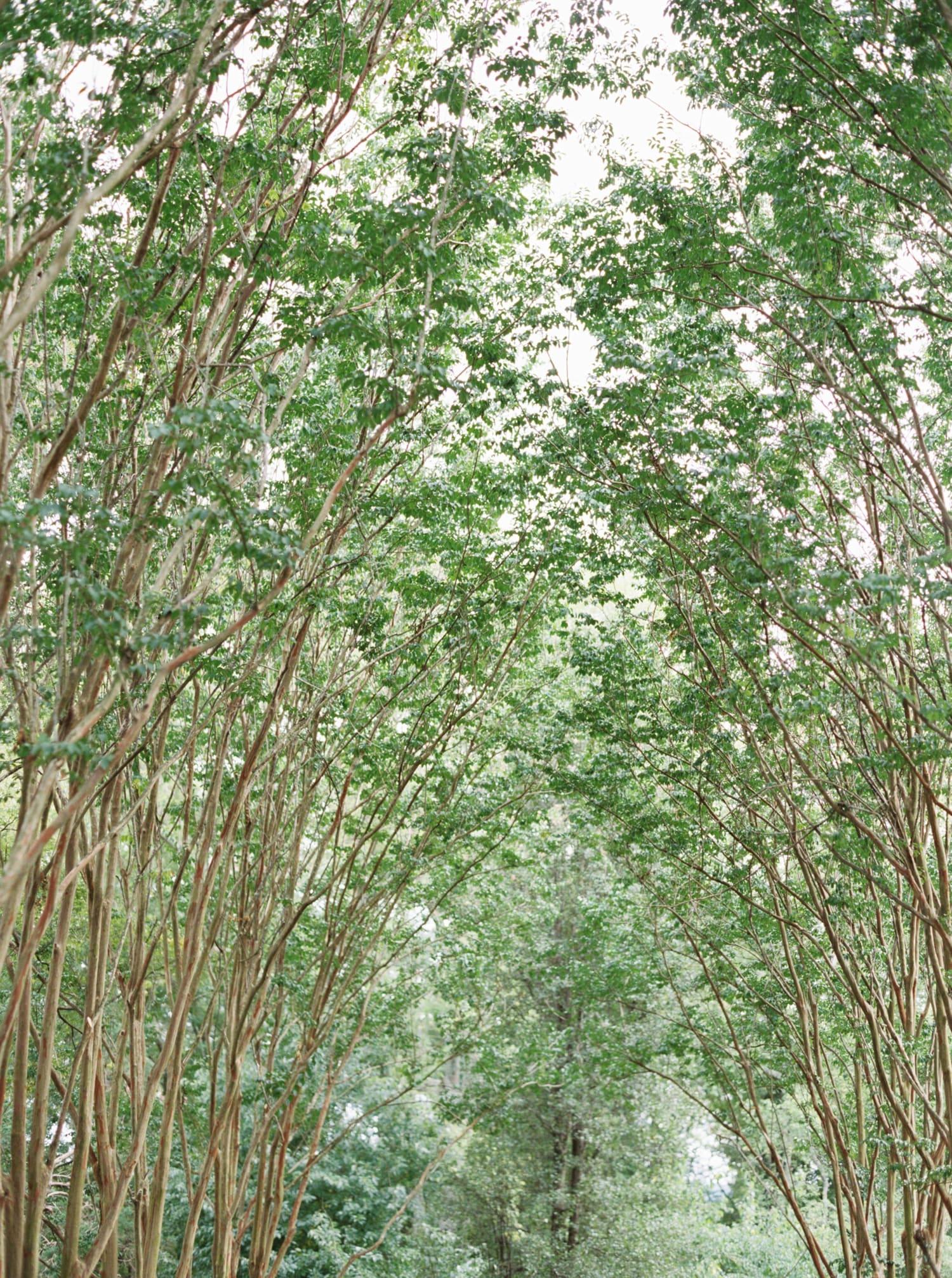 tuckahoe plantation wedding-66