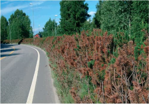 Plants and trees of side of road