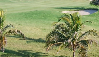 Golf course with palm tree