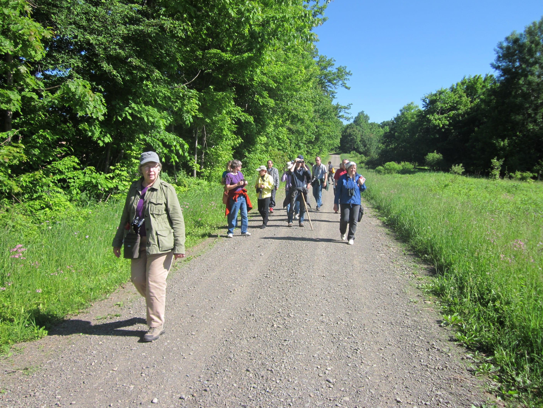 Participants walk Filor Hill Rd. in Morris on the June 7 DOAS bird walk