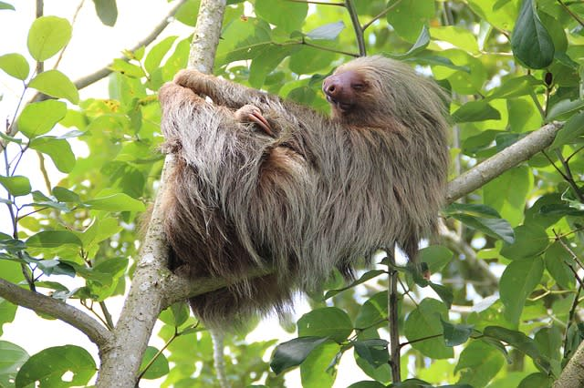 Costa Rica: Recent Adventures
