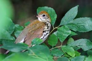 DOAS Sanctuary Bird Walk