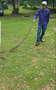 Pengendalian ular