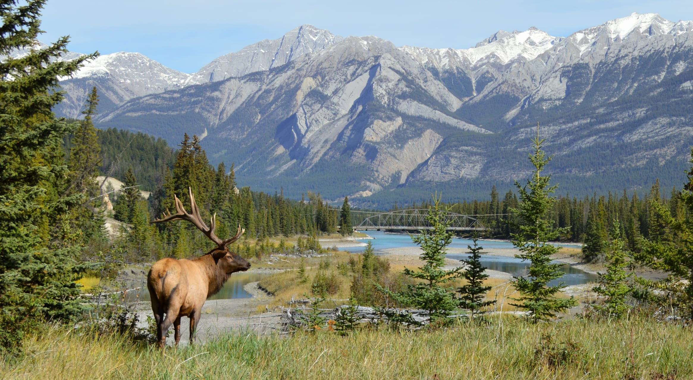 Alberta Road Trip