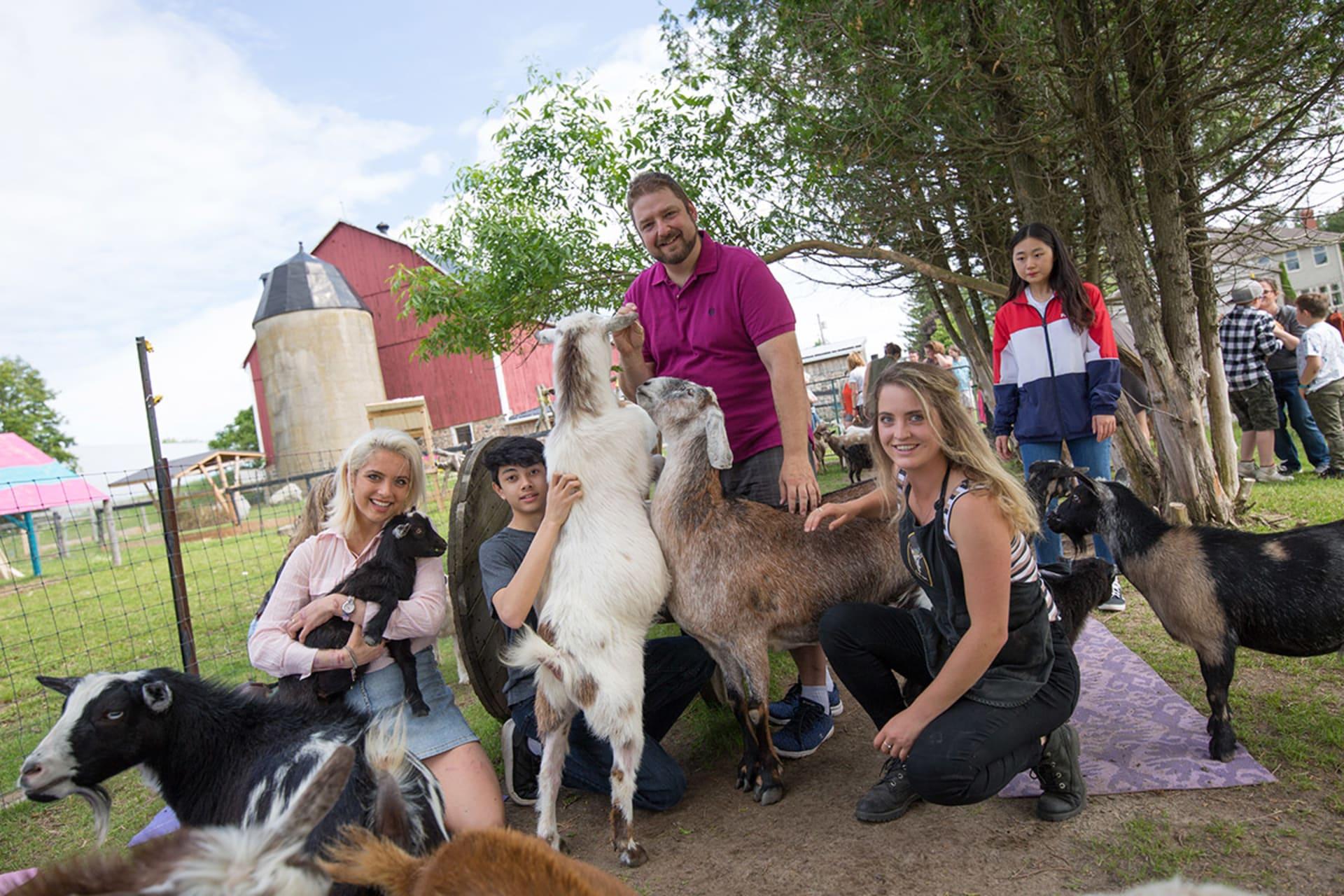 Greater Toronto Area - Goat Shmurgling in Canada