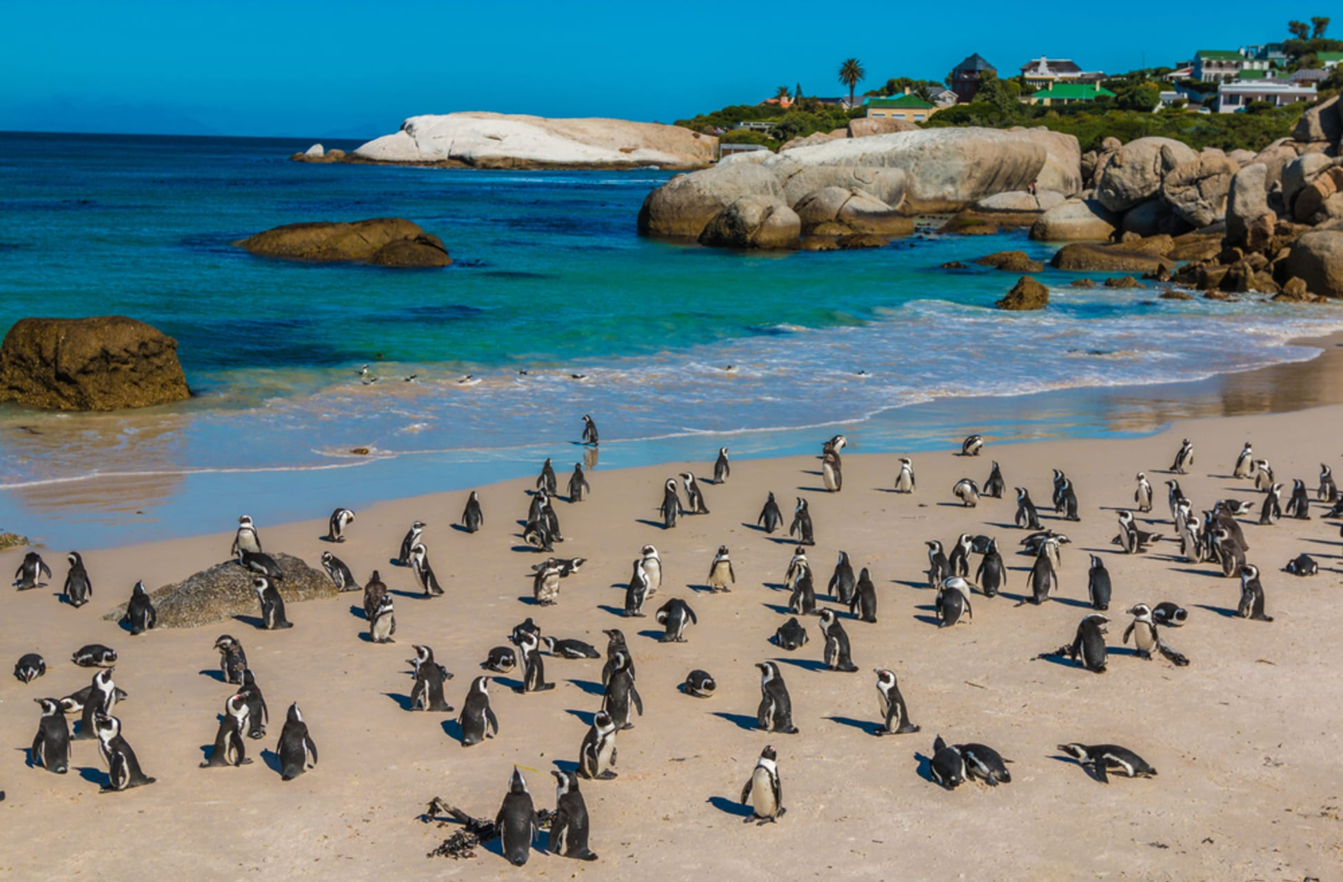 Cape Town - In persuit of the African Penguin
