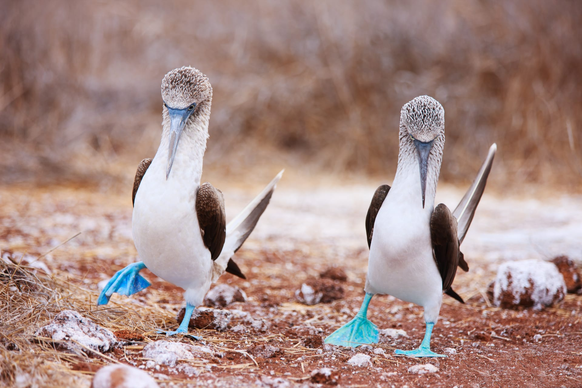 Puerto Lopez - Village of fishermen and blue-footed boobies