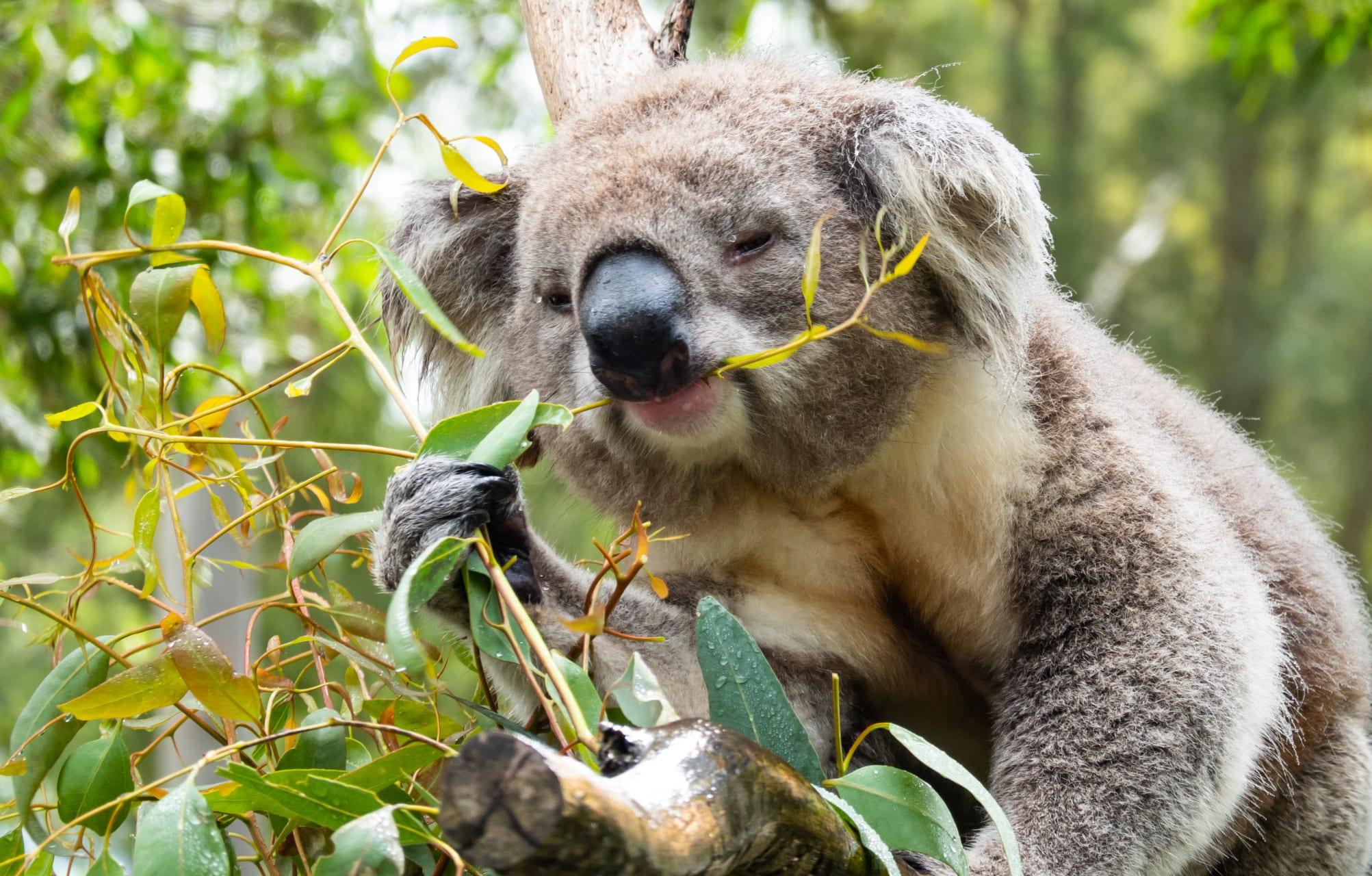Melbourne - Wildlife Sanctuary