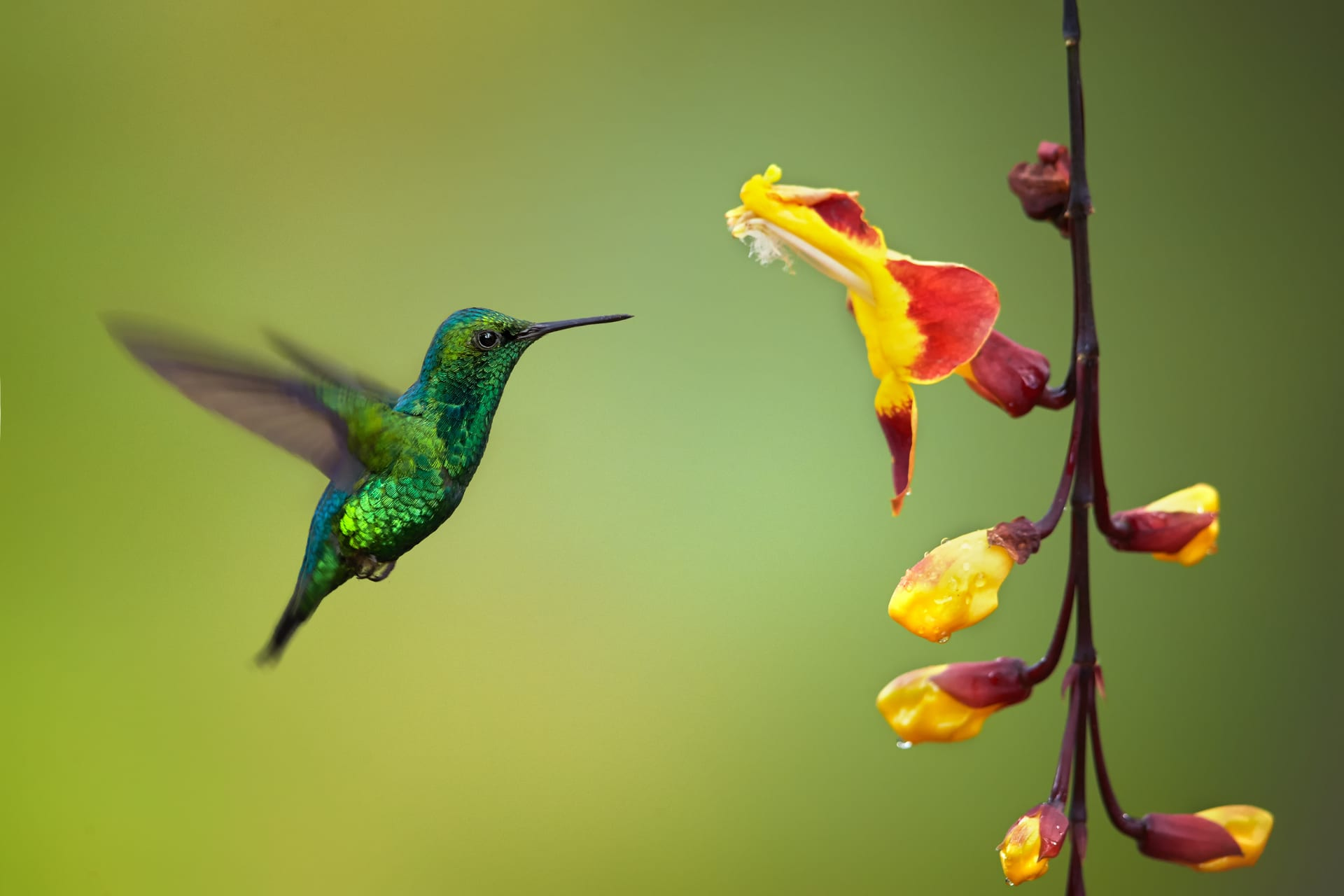 Mindo - Silent hummingbirds watching (Tour for Relaxing)