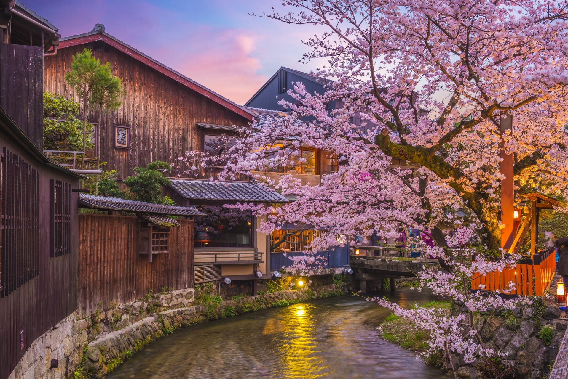 Kyoto - A Night Stroll under the Cherry Blossoms in Kyoto