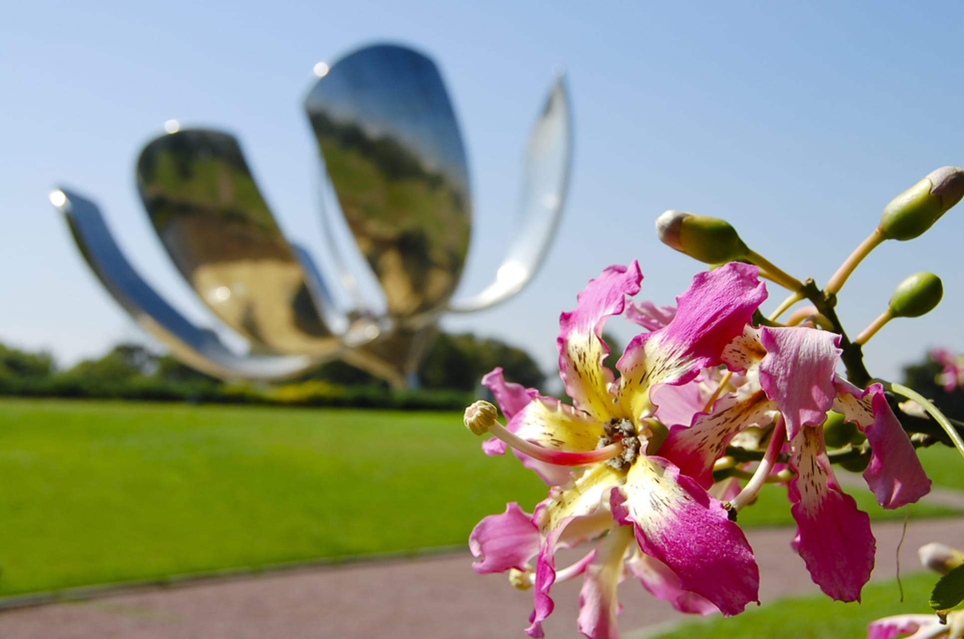 Buenos Aires -  Buenos Aires: Recoleta, Part 2 - In Quest of the Big Flower
