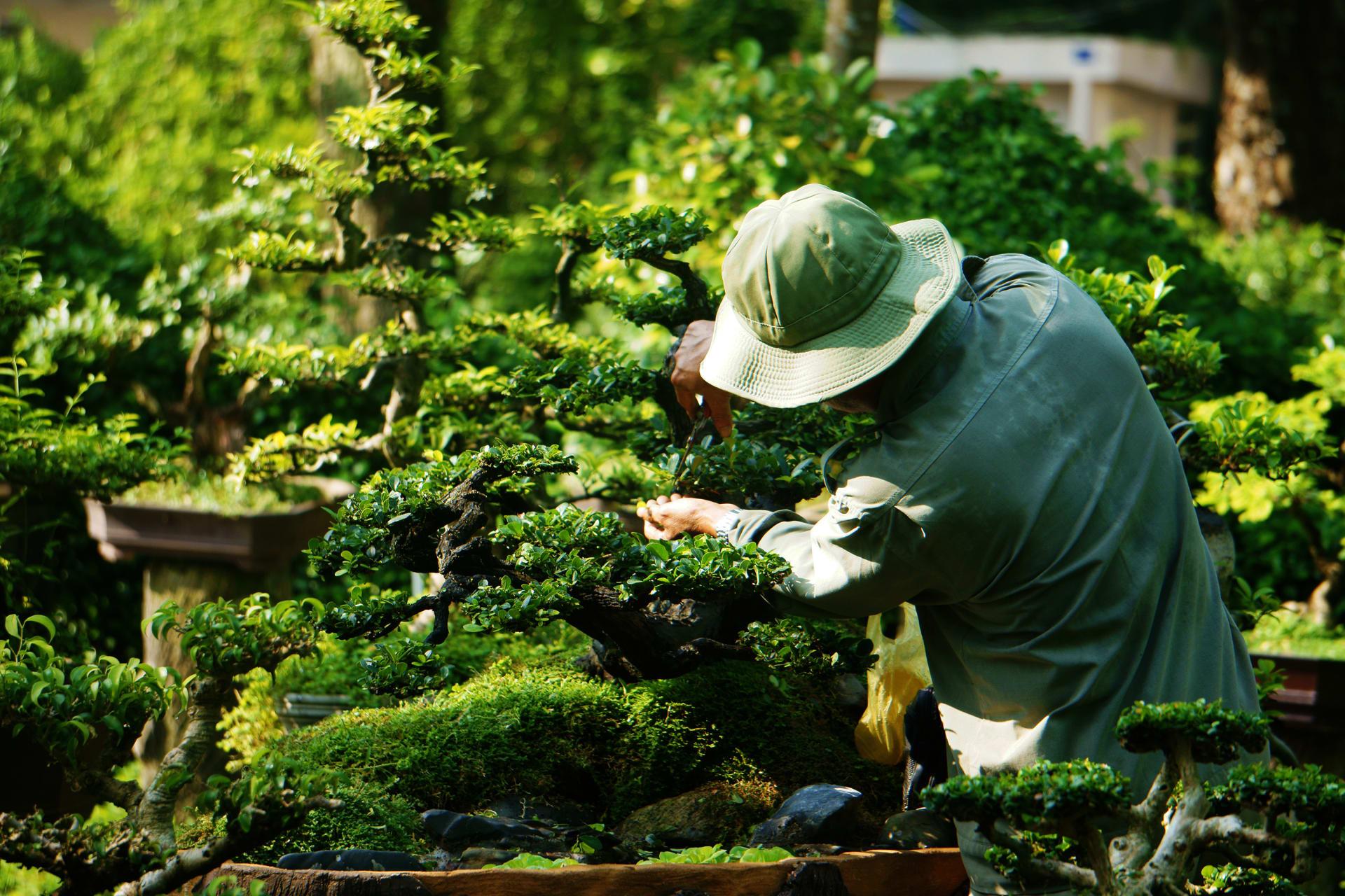 Ho Chi Minh City - Saigon Secret Gems - Day 8: Exotic Tropical Garden & The Art of Bonsai