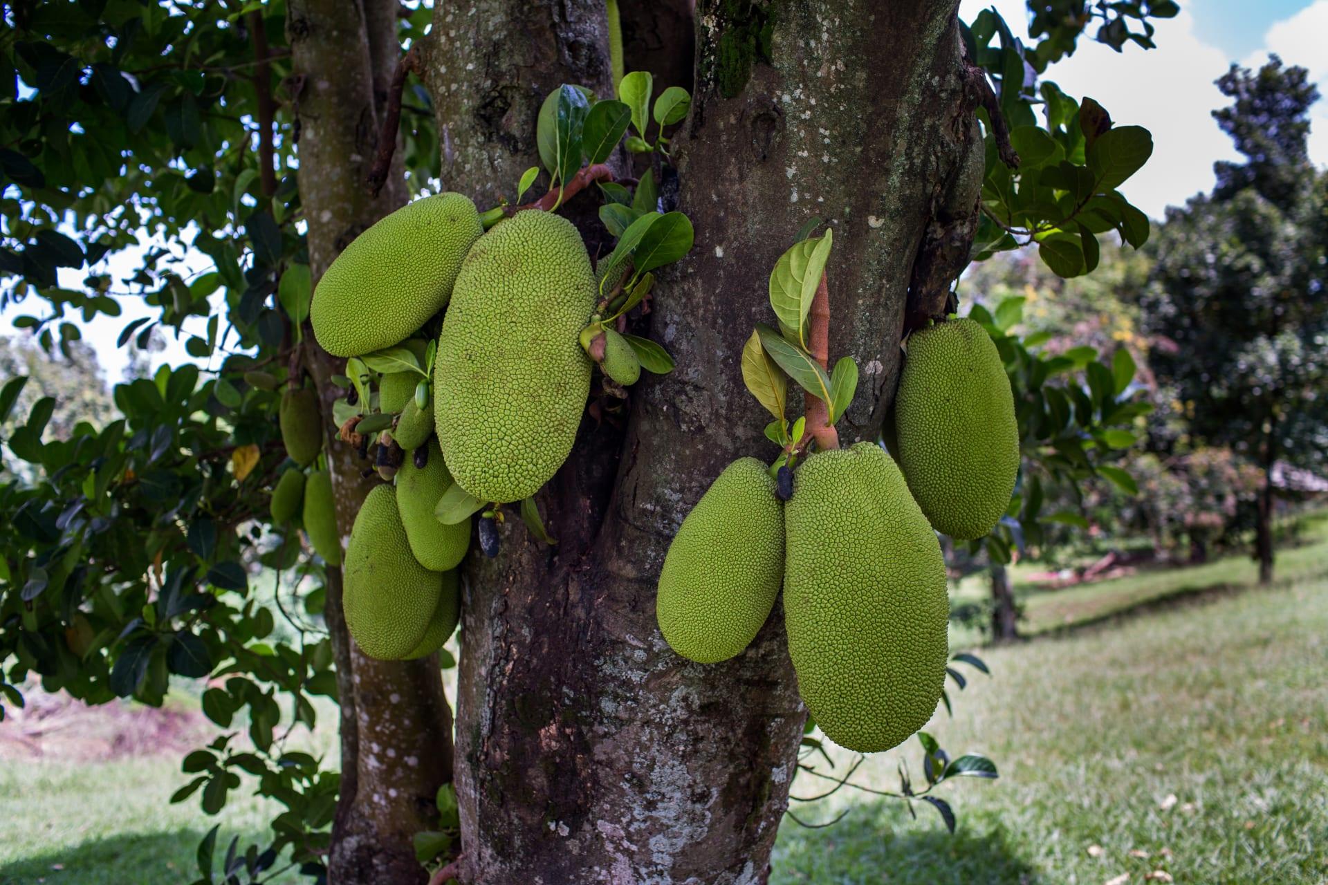 Kampala - Homey Tropical Garden Stretch Walk