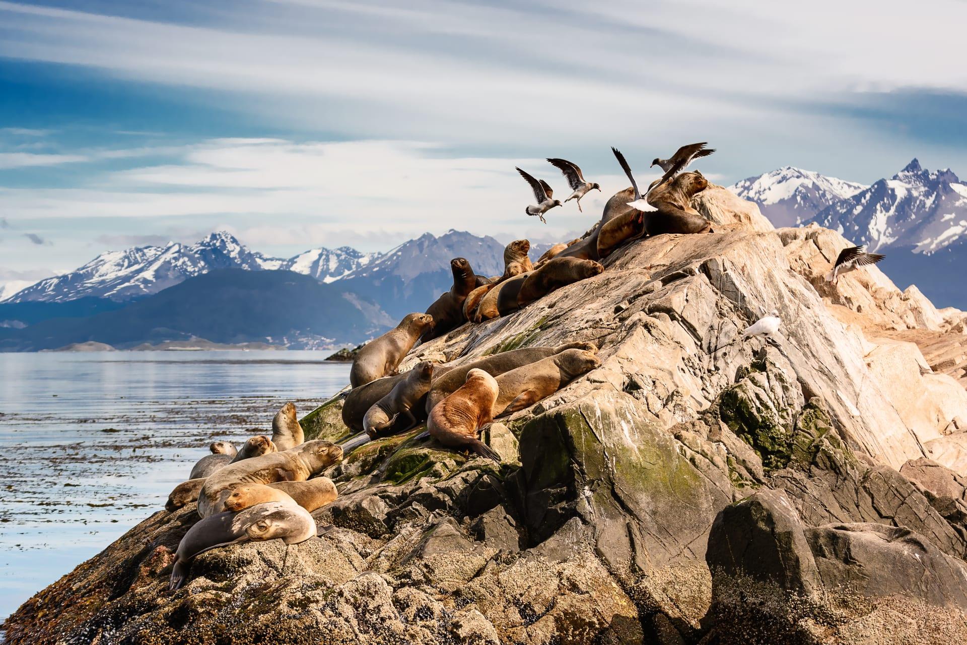 Ushuaia - Navigating the Beagle Channel