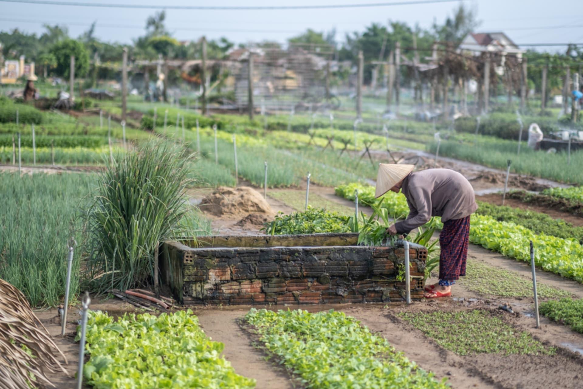 Hội An - Hội An - Day 2: Herb & Vegetable Village