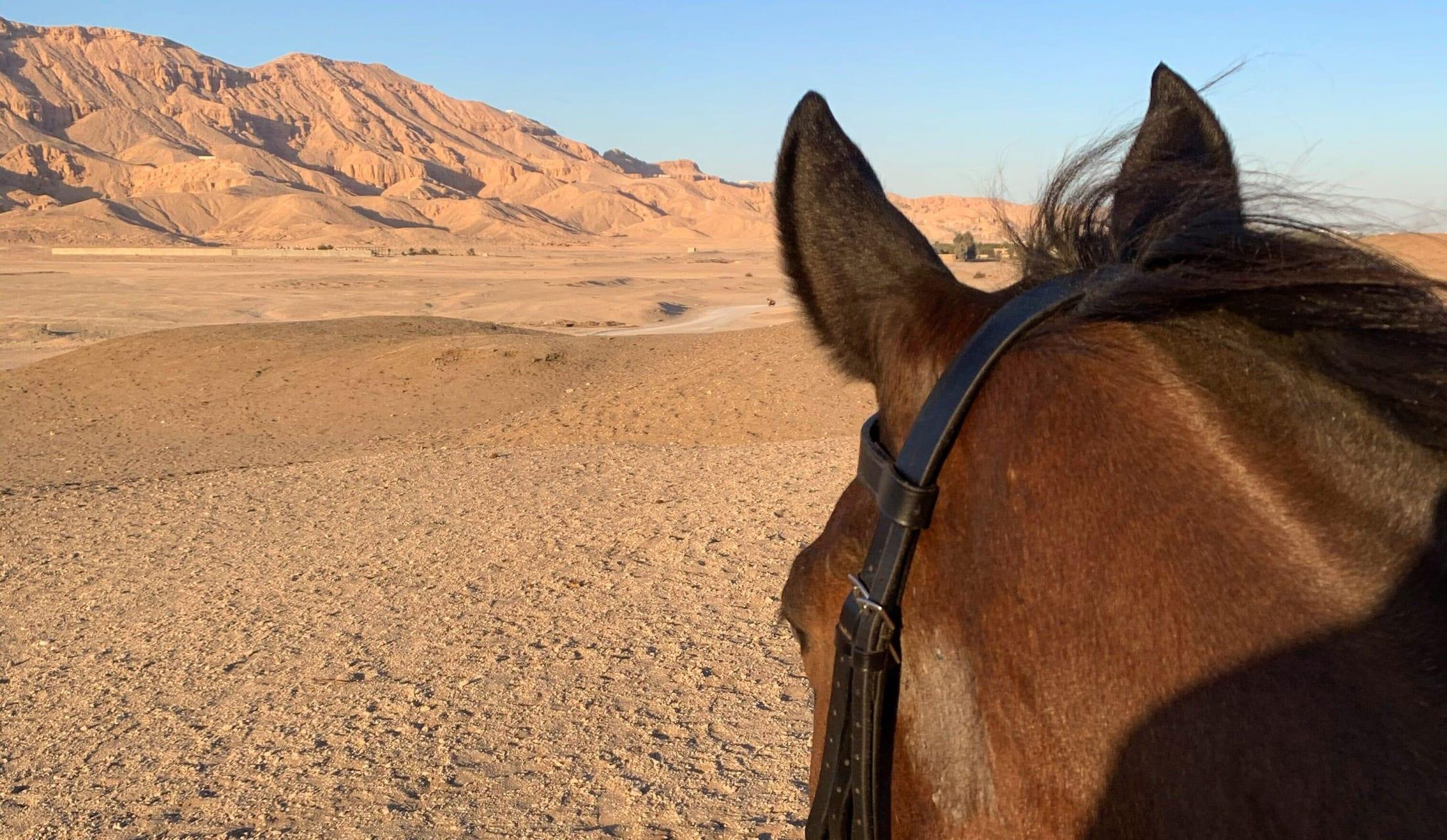 Luxor - The Theban Desert On Horseback