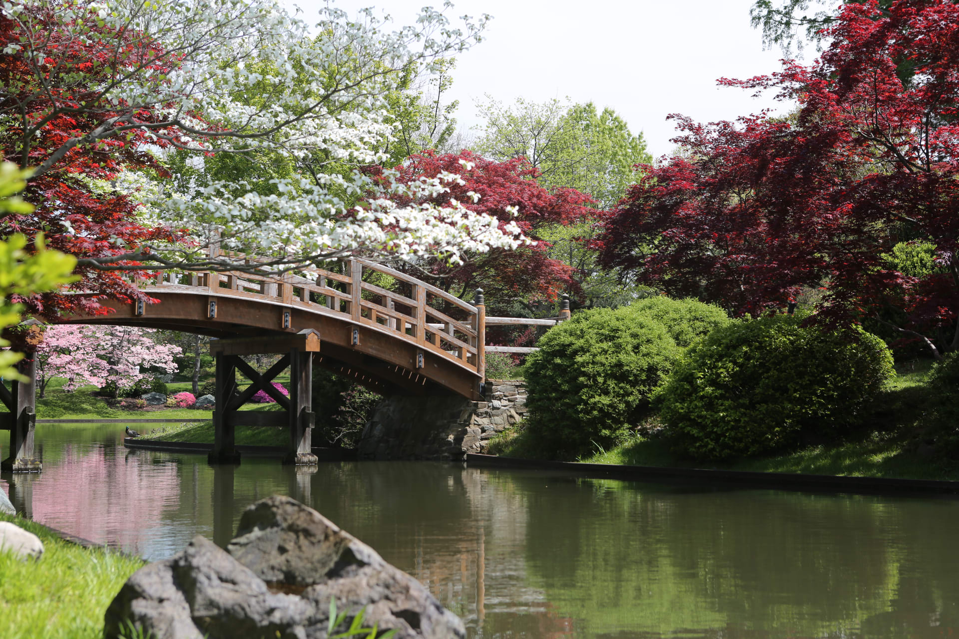 USA Road Trip - Aaron & Patrick Hit the Road: Origami in the Missouri Botanical Garden
